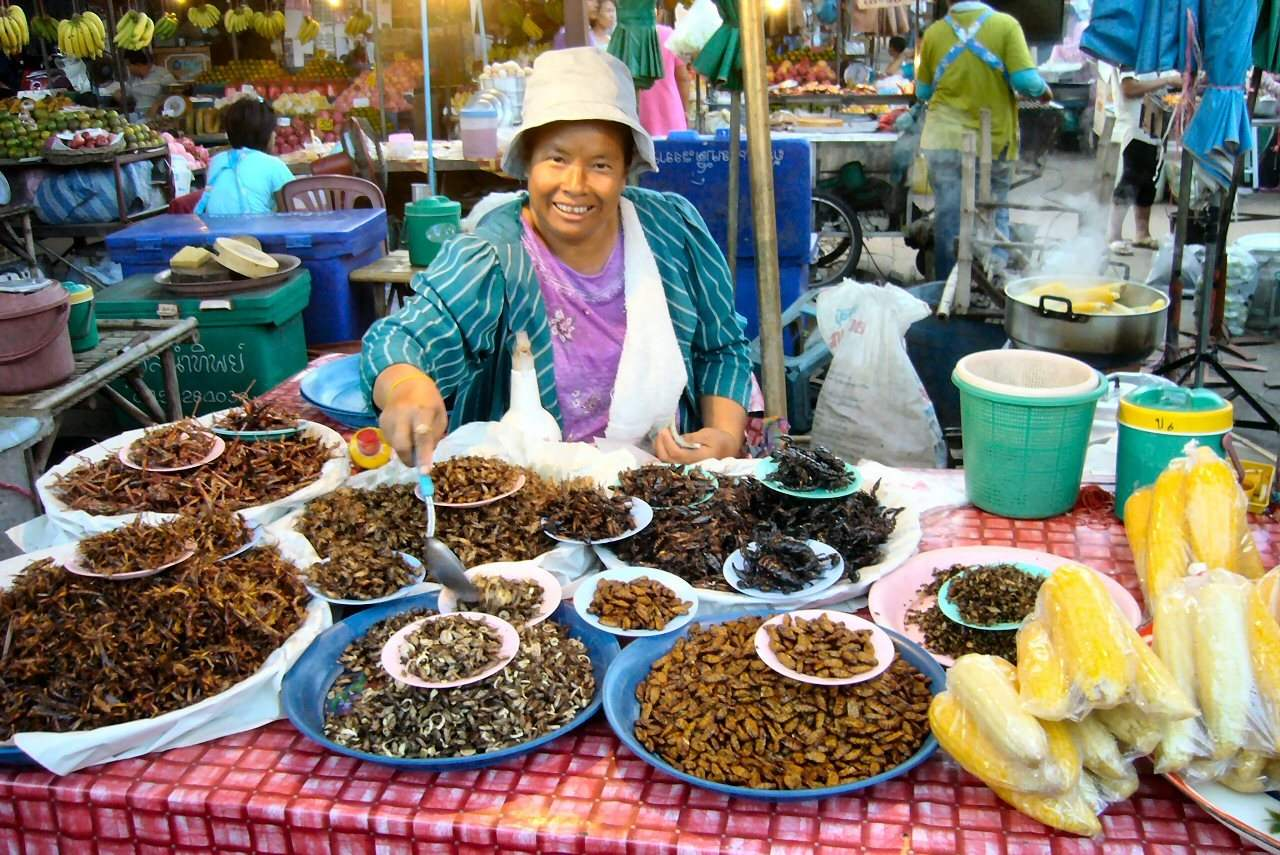 insectes thailandes